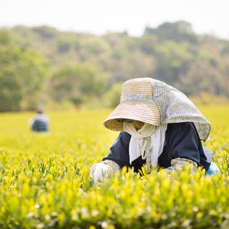 teafarmers